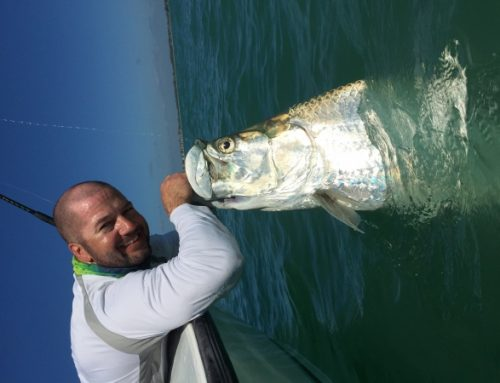 Fort Myers Tarpon charter fishing