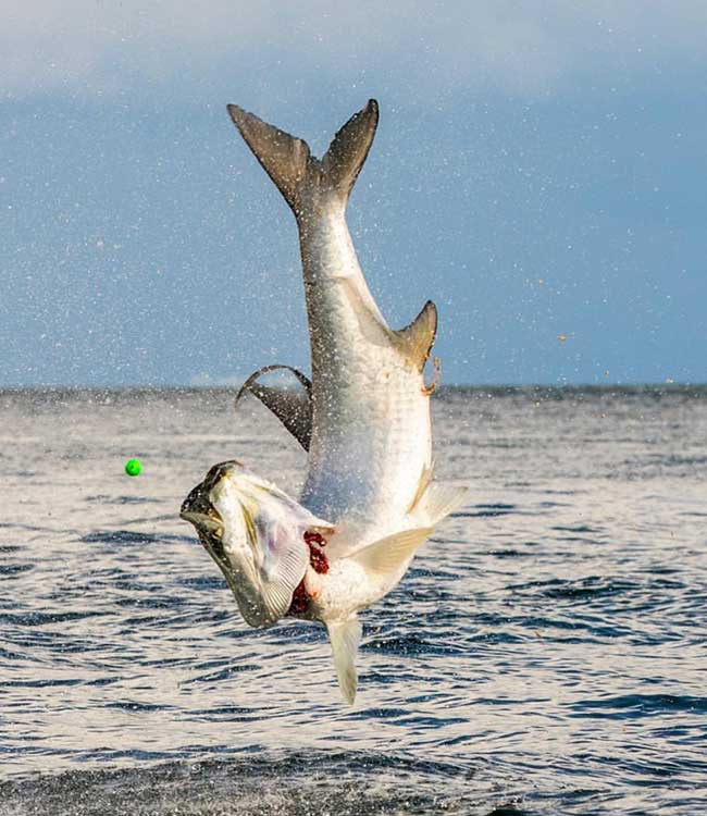 tarpon fishing ft myers fl
